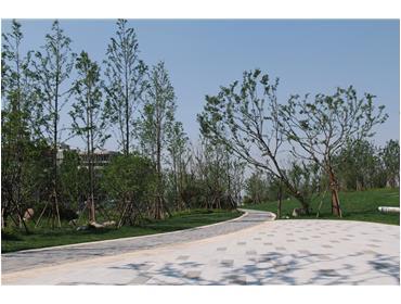 新加坡?南京生态科技岛滨江风光带景观绿化三标段